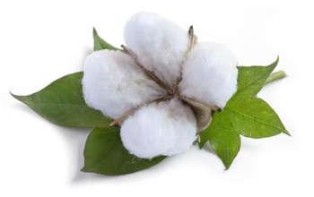 cotton bong